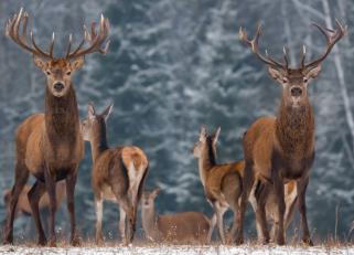 Nevada State Department of Wildlife